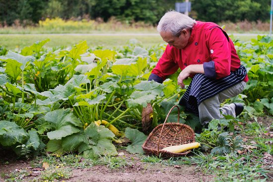 Bristol, VT: Chef Doug picking fresh produce from our own garden