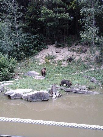 Wildnispark Zurich Langenberg: Mama bear and her cubs