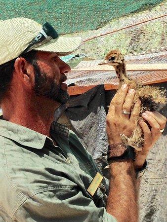Highgate Ostrich Show Farm: photo0.jpg
