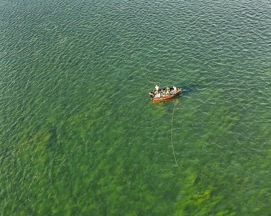 Grand Island, NY: Our water is incredibly clear around here - like fishing in a giant aquarium