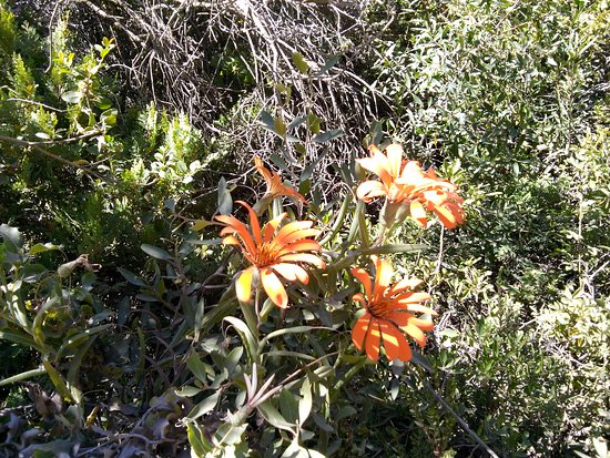 Nahuel Huapi National Park: Mutisias