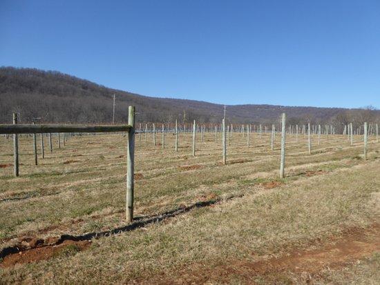 Huntly, VA: Vines