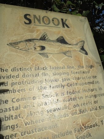 Belleair Beach, ฟลอริด้า: You can catch snook here