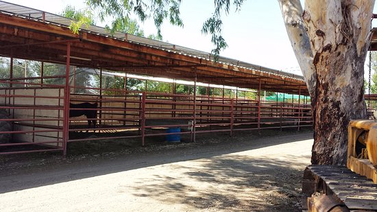 Woodlake, Californië: Horse stalls also available for rent