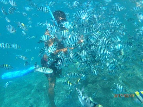 Tavewa Island, Fidschi: photo2.jpg