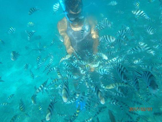 Tavewa Island, Fidschi: photo3.jpg