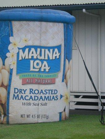เคียโอ, ฮาวาย: large can of mauna loa macadamia nuts