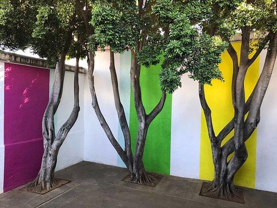 Museo de Arte Contemporaneo de Oaxaca (MACO): photo1.jpg