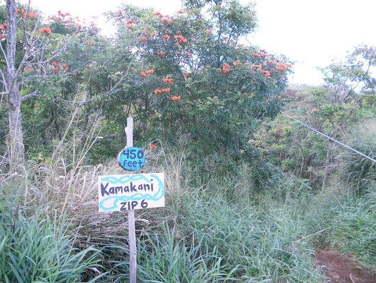 Hawi, HI: Kamakani zip 450 feet long line