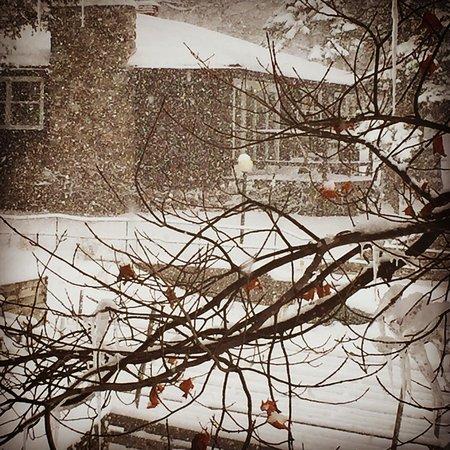 North Kawartha, Canada: photo0.jpg