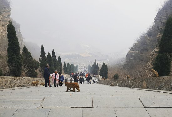 Jiyuan, China: Wulongkou, where thousands of monkeys live. You could feed and touch them.