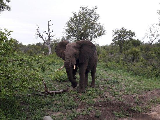 Mala Mala Private Game Reserve, Sudáfrica: Passeio