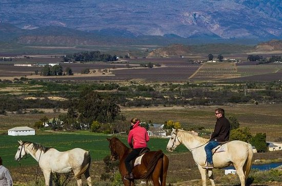 Privat tur: Cape Winelands Tour fra...