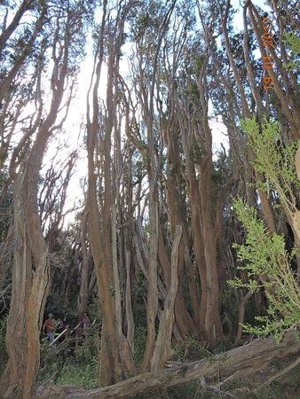 Provincia de Río Negro, Argentina: Bosque de Arrayanes