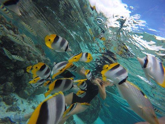 Jardin de Corail : El Jardín de Coral