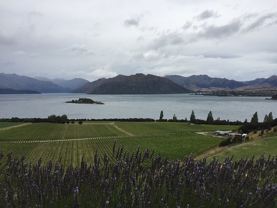 Rippon Vineyard: photo0.jpg