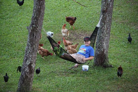 Hotel Campestre : My son loved feeding the chickens and relaxing.