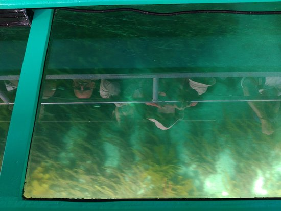 Leigh, Nueva Zelanda: underwater seaweed and reflected heads--main view from the glass