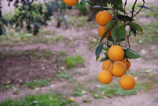 Addo, South Africa: oranges everywhere
