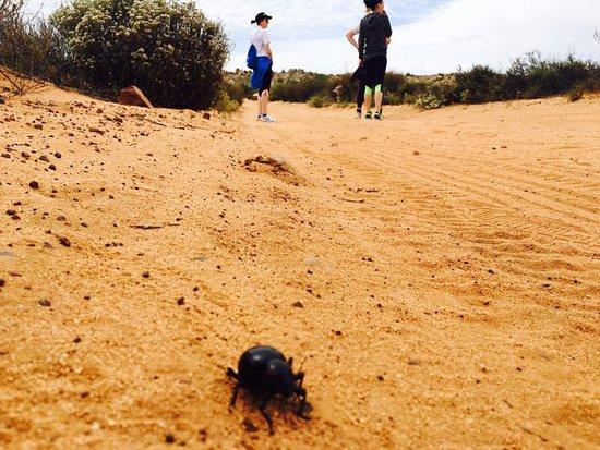 Kagga Kamma Private Game Reserve, Republika Południowej Afryki: Taking a walk