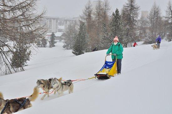 Borgata Sestriere, Italia: escursione con cani - fantastico