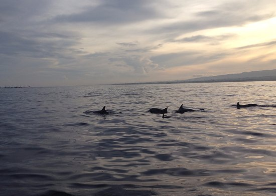 Lovina Beach, Ινδονησία: so lucky to meet the dolphins