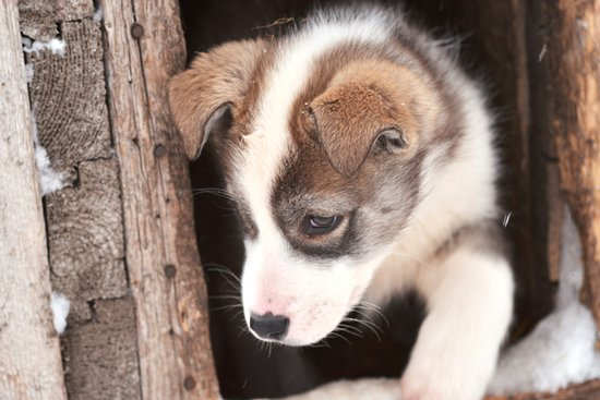 Longyearbyen, Norway: Puppies at Trapper's Station