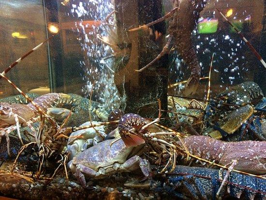 Restaurante O Pescador: 店先の水槽に大きな海老