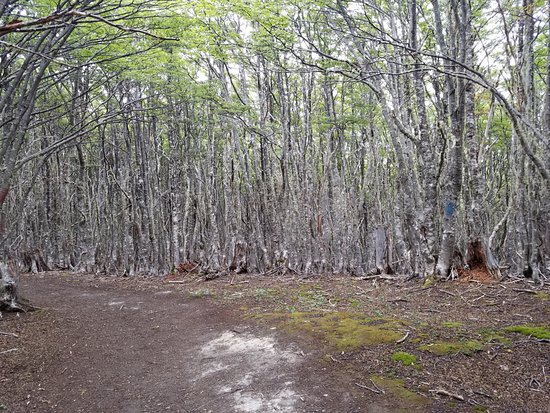 Reserva nacional Magallanes: Packed tight, you have no choice but to stay on trails