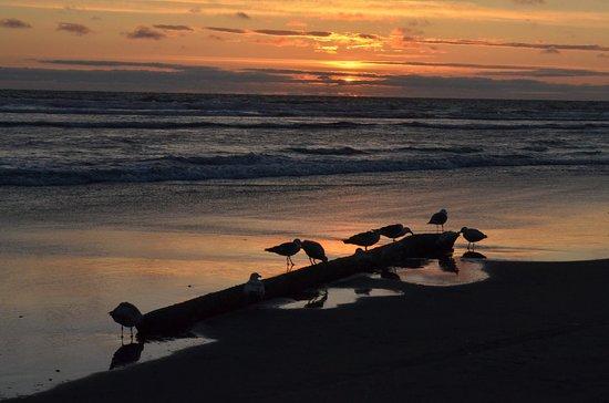 Long Beach, WA: Sunset at the beach