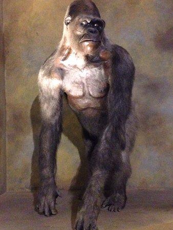Museo Civico di Zoologia: photo9.jpg