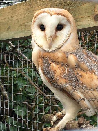 Drogheda, Irlanda: Their owl