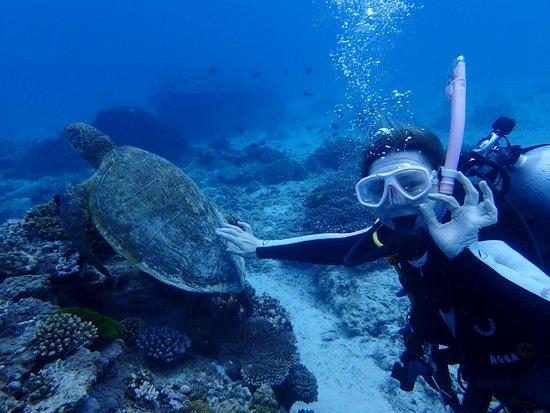 Lady Elliot Island, Austrália: Nurkowanie na Lady Elliot