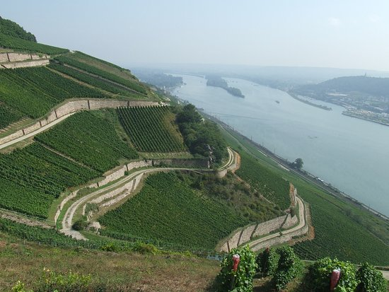 Eltville am Rhein, Alemania: Ready for a walk through the vinyards with a fantastic  view..?