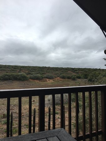 Addo Rest Camp: Elephants were in those trees when we arrived