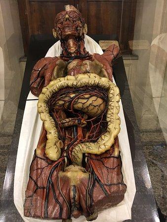 photo2.jpg - Picture of Museo di Anatomia Umana, Turin - TripAdvisor