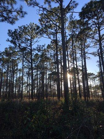 Newport, Carolina del Norte: Longleaf Pine Forest.