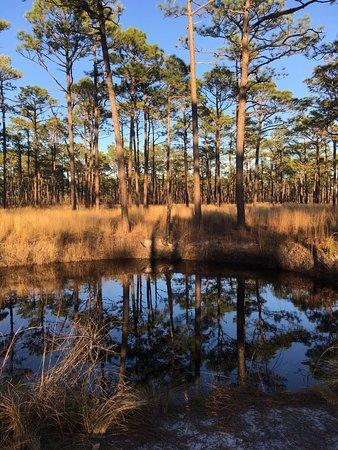 Newport, Carolina del Norte: Bob's sinkhole.
