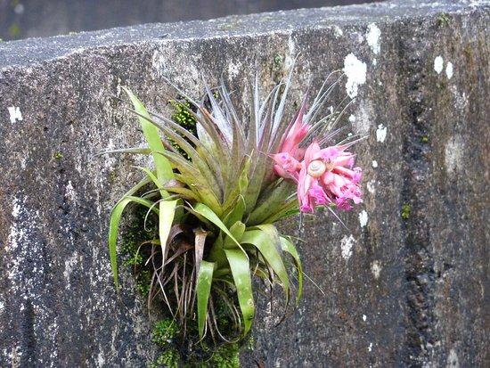 Apiai, SP: Fauna e flora ricas
