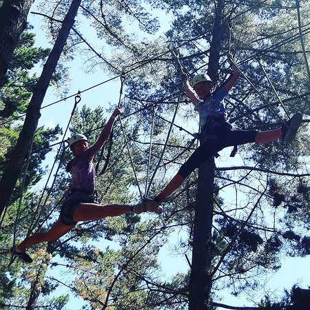 Tree Adventures: Fun up in the trees!!