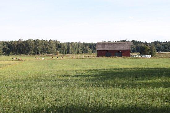 Viikinlahti park