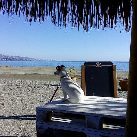 Sulla spiaggia ottimo cibo e possibilità di portare il proprio cane!