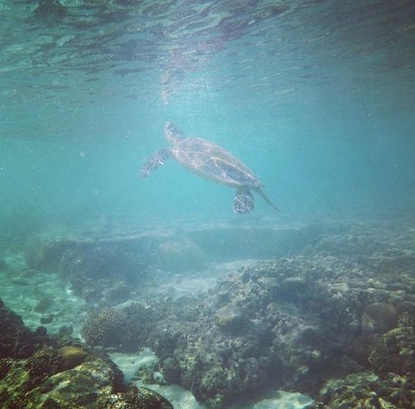 Lady Elliot Island, Australia: Sealife in the lagoon