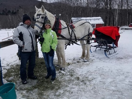 Gentle Giants Sleigh and Carriage Rides Photo