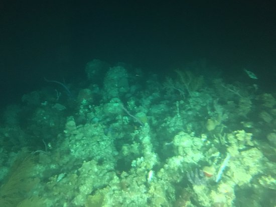 George Town, Grand Cayman: coral/fish