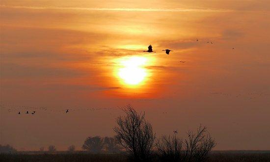 Merced National Wildlife Refuge: Sandhill Cranes at sunrise