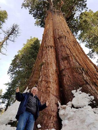 Three Rivers, CA: MASSIVE TREES