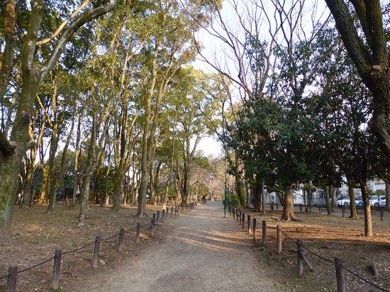Tsuruma Park: 鶴舞公園 21