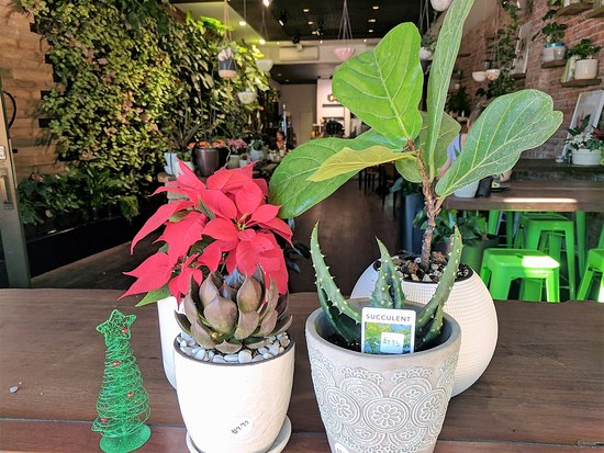 Bassendean, Australia: A variety of plants and pots always for sale