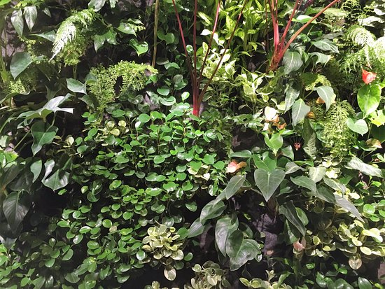 Bassendean, ออสเตรเลีย: a close up of our real plant wall.